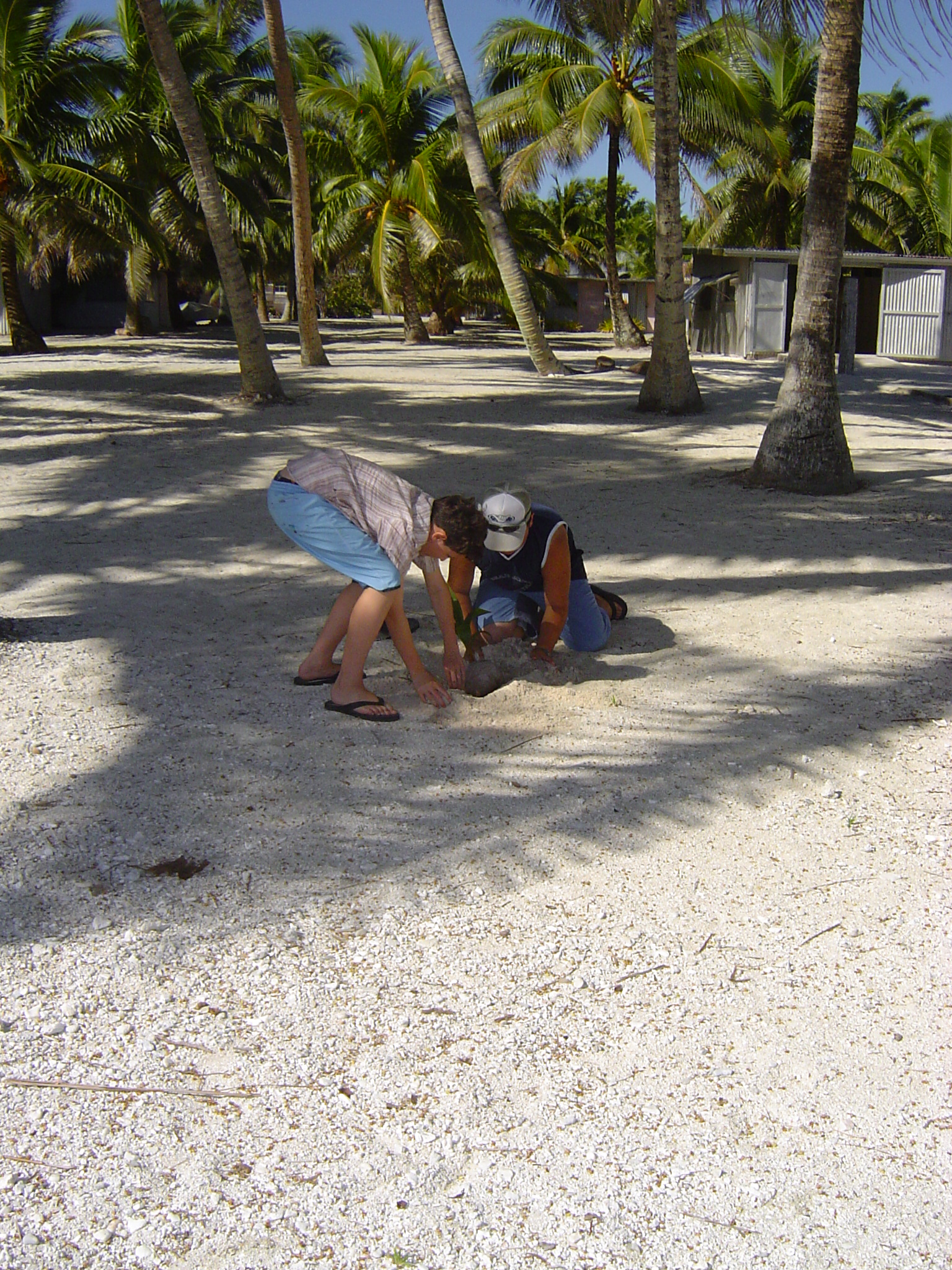 Planting a coconut tree  in memory of their visit