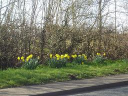I visited in March, the beginning of Spring and daffodils bloomed on the roadside